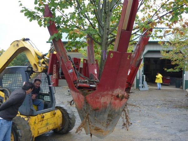 Transplanting Trees | Landscaping Blog | Cross River Design